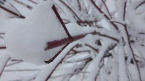 Der Schnee ist Zeichen des Winters Stockfoto