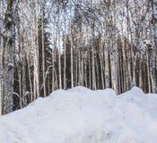 Der Schnee in te Wald und im Hintergrund des blauen Himmels Stockbild