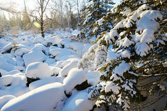 Der Schnee umfasste Baumsonnenaufgang Lizenzfreie Stockfotografie