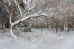 Der schneebedeckte Baum Stockfotos