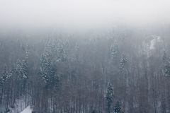 Der schneebedeckte Karpatengebirgswald Lizenzfreies Stockfoto
