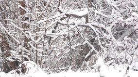 Der schneebedeckte Tag die Kunst des Charmes des Schnees stock video