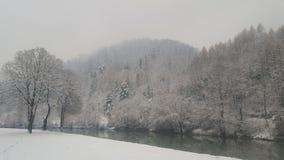 Der schneebedeckte Wald Stockfoto