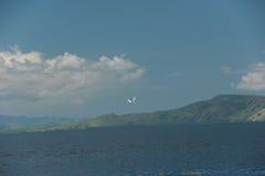 Der schnelle Flug einer weißen Seemöwe ist über dem blauen Meer in den Hügeln der Küste von Singapur Stockbild
