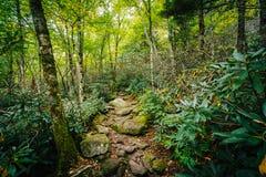 Der schwarze Felsen-Naturlehrpfad, am großväterlichen Berg, Nord-Caro stockfotos