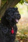 Der schwarze Hund Stockfotografie