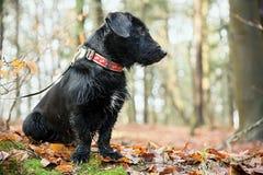 Der schwarze Hund lizenzfreie stockfotos
