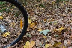 Der schwarze Reifen einer Mountainbike, die über gelben Blättern rollt Lizenzfreie Stockfotografie