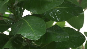 Der schwere tropische Regen, der unten auf Grün fällt, verlässt - 4k