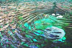 Der Schwindel erregende Strom der Forelle stockfotografie