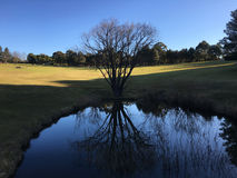 Der See bei Fagan Park Stockfotografie