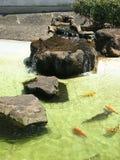 Der See carps Lizenzfreies Stockbild