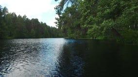 Der See im Sommerwald stock video footage