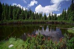 Der See mit gefallenen Bäumen Stockfoto