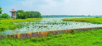Der See mit Lotosanlagen Lizenzfreie Stockbilder