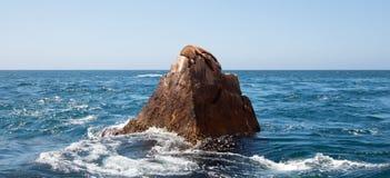 Der Seelöwe, der auf Berggipfel-Felsen an den Ländern faulenzt, beenden in Cabo San Lucas Baja Mexiko Stockbild