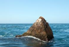 Der Seelöwe, der auf Berggipfel-Felsen an den Ländern lazing ist, beenden in Cabo San Lucas Baja Mexiko Stockfotos