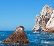Der Seelöwe, der auf Berggipfelfelsen an den Ländern sich sonnt, beenden bei Cabo San Lucas Baja California Mexiko Stockfoto