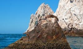 Der Seelöwe, der auf Berggipfelfelsen an den Ländern sich sonnt und faulenzt, beenden bei Cabo San Lucas Baja California Mexiko Stockbild