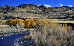 Der Shoshone-Fluss und Blendungsautumn leaves outside cody, Wyoming Stockfoto