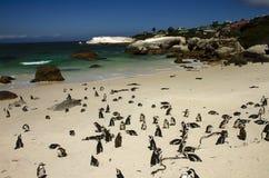 Der Simon-Stadt des Pinguins Stockfotos