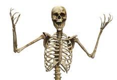 Der skelettartige Schrei Stockbild