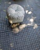 Der Skulptur-Weg in der Nachbarschaft von Boedo Buenos Aires Argentinien Südamerika Stockfotografie