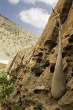 Der Socotra-Wüstenrose-oder Flaschen-Baum (Adenium obesum socotranum) Lizenzfreies Stockfoto