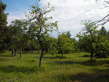 Der Sommer-Garten Stockfotos
