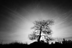 Der Sonnenaufgang hinter einem alten Baum Lizenzfreies Stockfoto