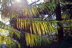 Der Sonnenglanz durch die Niederlassungen Stockbild