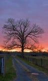 Der Sonnenuntergang-Baum Lizenzfreie Stockfotografie
