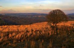 Der Sonnenuntergang, der Bäume hervorheben und das Gras Brecon erleuchten Nationalpark stockbild