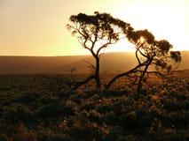 Der Sonnenuntergang in der Savanne. Stockbilder