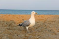 Der Sonnenuntergang der Vögel stockfoto