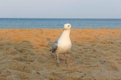 Der Sonnenuntergang der Vögel lizenzfreie stockbilder
