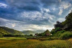 Der Sonnenuntergang und das Reisfeld stockbilder