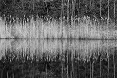 Der Spiegel des ruhigen Wassers des Sees Stockbilder