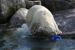 Der spielende Eisbär stockfoto