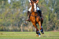 Der Spieler und das Pferd im Polo stockfotos
