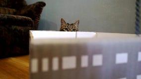 Der Spielmeister und seine Katze - die Katze versteckt sich im Raum hinter dem Kasten stock video footage