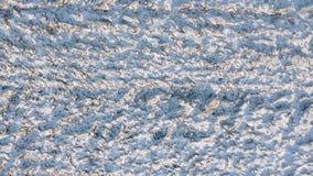 Der Spitze Ansicht unten von Wiesen im Winter stock footage