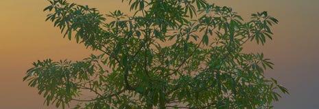 Der Spitzenschnittbaumteil mit orange Sonnenlicht-Blicksatz oder die Dämmerung machen herein Lizenzfreie Stockfotos