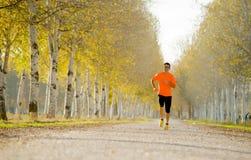 Der Sportmann, der draußen in weg von Straßenspur läuft, rieb mit Bäumen unter schönem Herbstsonnenlicht Stockfoto
