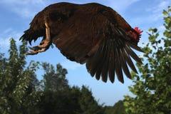 Der Sprung des Huhns Lizenzfreies Stockbild