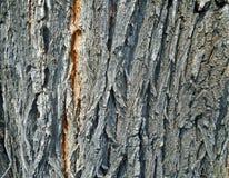 Der Stamm des Baums Lizenzfreie Stockfotos