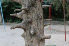 Der Stamm des Baums mit vielen beschnittenen Niederlassungen Stockfotos