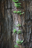 Der Stamm eines alten Baums Stockfoto