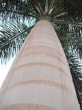Der Stamm eines Palmeabschlusses oben lizenzfreies stockbild