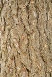 Der Stamm und die Barke eines erwachsenen Baums, Hintergrund Lizenzfreies Stockfoto